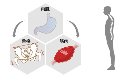 内臓 骨格 筋肉